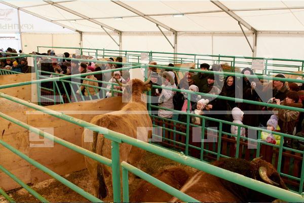 Фестиваль «Мясной базар» в Тюмени: 8-9 марта 2013